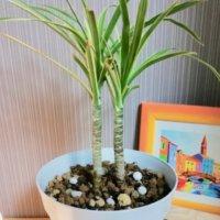 観葉植物の正しい肥料の与え方|おすすめの種類は?どの時期に与える?の画像