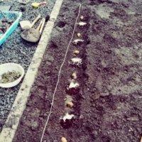 緩効性肥料とは|どんな種類や特徴がある?おすすめの使い方とは?の画像