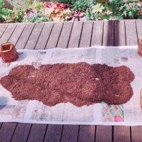 観葉植物におすすめの土|選び方やカビ、虫の対策は?の画像