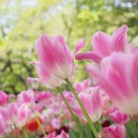 卒業式・卒園式に贈りたい花|感謝やお祝いの意味を持つ花言葉は?の画像
