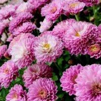 残暑の「9月の花」写真展|人気の種類や品種、特徴、開花時期は?の画像