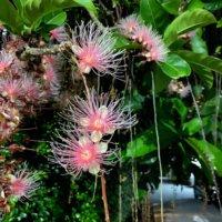 サガリバナの花言葉|意味や花の特徴、一夜花ってなに?の画像