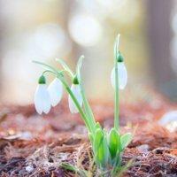 秋に植える花16選!多年草や一年草のおすすめの種類は?の画像