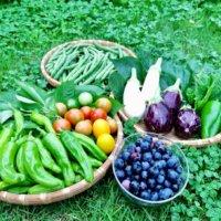 春植え・春まき野菜|初心者でも簡単に栽培できる種類15選の画像