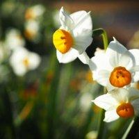 冬植え球根|12月〜1月でも植えられる?おすすめ種類10選の画像