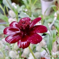 秋の花でガーデニング!寄せ植えや花壇におすすめの草花8選の画像