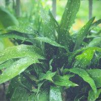 ハランの花言葉|意味や種類、花は咲かせるの?の画像