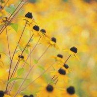 この夏、人気だったお花とは?ガーデニング愛が育んだ美しい草花たちの画像