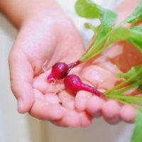 家庭菜園初心者におすすめ!春にプランターで簡単に育てられる野菜10選の画像
