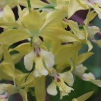 エビネの花言葉|花の特徴や種類、変わった名前の由来は?の画像