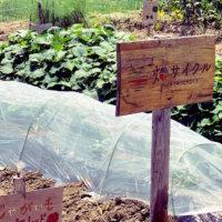 家庭菜園の土作り!プランターの用土配合とは?なぜ石灰を畑にまくの?の画像
