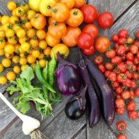 肥料や支柱がいらない! 「めちゃラク!栽培セット」で家庭菜園デビューしよう♫の画像