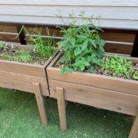 プランターで野菜を育てよう!始め方と簡単に育つ野菜15選の画像