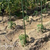 畝の作り方|幅や高さはどのくらい?簡単にできる畝立てのやり方とは?の画像