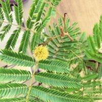 エバーフレッシュの花言葉|人気の種類や意味、花は咲くの?の画像