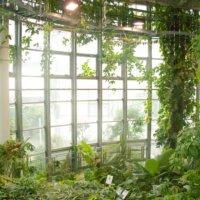 日本で一番小さい植物園? 「渋谷区ふれあい植物センター」へ行ってみたの画像