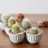 サボテンの種類|花が咲くのは?形別で人気品種18選をご紹介!の画像