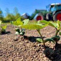 大豆の花言葉|花や実の特徴、種類や栄養は?の画像
