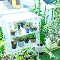 多肉植物の冬越しにも◎100均材料やペットボトルで簡易ミニ温室をDIY!の画像