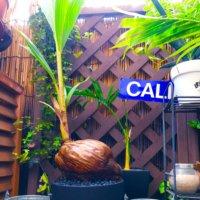 ココヤシの花言葉|意味や由来、風水の効果は?の画像