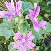 ハーブの寄せ植え|相性の良い組み合わせやおすすめの植物は?の画像