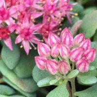 秋晴れの「10月の花」写真展|人気の種類や品種、特徴、開花時期は?の画像