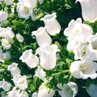 冬植え・冬まきの草花|寒い時期でも育てられるおすすめ種類10選の画像