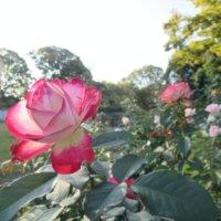 福岡市植物園を3Dバーチャルで散策してみよう!の画像
