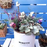 冬の寄せ植え|おすすめの草花12選&おしゃれなアイデア集の画像