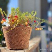 クランベリーの花言葉|意味や花の特徴、効果や栄養は?の画像
