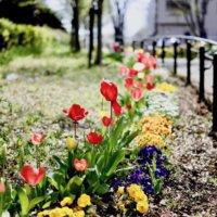 宿根草とは|代表的な花や鉢植えで育てられる種類は?の画像