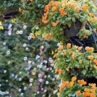 つるバラの種類|咲き方などの特徴や系統は?の画像