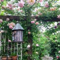 憧れのお庭へ!「つるバラ」でステキなガーデニングを楽しもう♫の画像