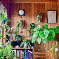 日当たりが悪い部屋でもOK!日陰でも育つ観葉植物10選の画像