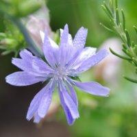 ハーブの種類31選!花が咲くのは?料理に使えるのは?庭植え向きなのは?の画像