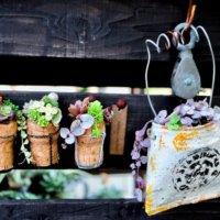 インテリアにおすすめ!多肉植物を壁掛けでかわいく飾るアイデア集の画像