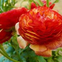 1月の誕生花|日にちごとの花の一覧や花言葉、フラワーギフトにもおすすめ?の画像