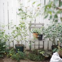 おしゃれな庭の目隠し方法!フェンスや庭木で上手に隠すには?の画像