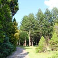 まるで外国にいる気分? 「レッドヒル ヒーサーの森」の絶景に癒されようの画像