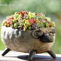 カラフルでかわいい!多肉植物の「ちまちま寄せ」アイデア集の画像