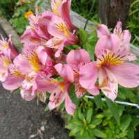 4月の誕生花まとめ|花の名前・花言葉を月別・日別で見てみようの画像