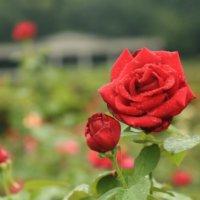 3Dオンライン植物園 取り組み一覧の画像
