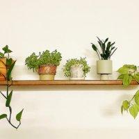お部屋の空気をキレイに!空気清浄効果の高い観葉植物8選の画像