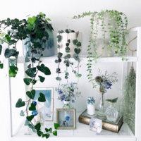 観葉植物におすすめ!高い場所やハンギングで飾れるつる性植物10種類の画像