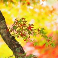 芸術的な紅葉が大集結!写真で紅葉狩りを楽しんでみませんか?の画像