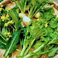 春野菜の栽培|種まきや植え付けはいつ?旬に食べたい10種類の画像