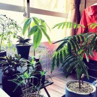 観葉植物と風水|金運を上げるのは?玄関やリビングにおすすめなのは?の画像