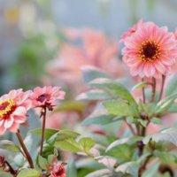 春植え球根|植えっぱなしで毎年咲く品種は?おすすめ10選の画像