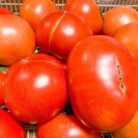 トマトのうどんこ病|原因や症状は、対策や治し方はある?の画像
