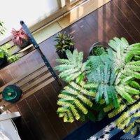 お部屋のインテリアに!観葉植物のステキな飾り方アイデアとは?の画像